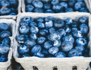 Blueberries Seminars in Latin America and Spain