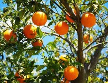 AGQ Labs attends UC Riverside Citrus Day
