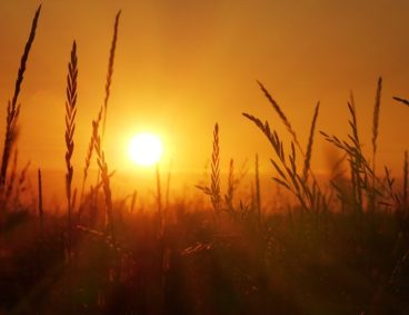 Stress in crops due to high temperatures