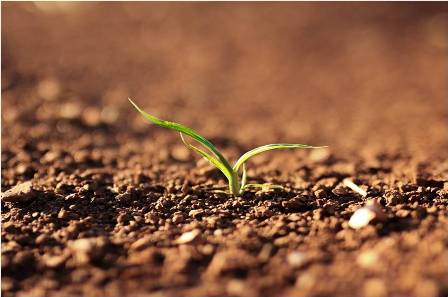 agricultural soils analyses