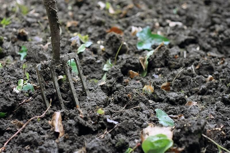 organic matter in soil