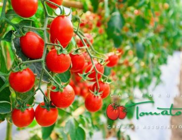 Tomato Growers Association Annual Meeting
